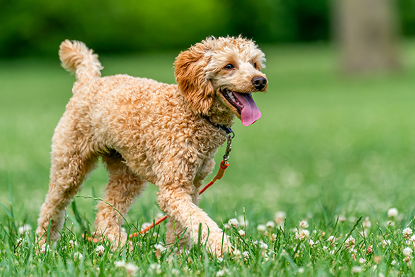 Best Dog Friendly Parks in Calgary