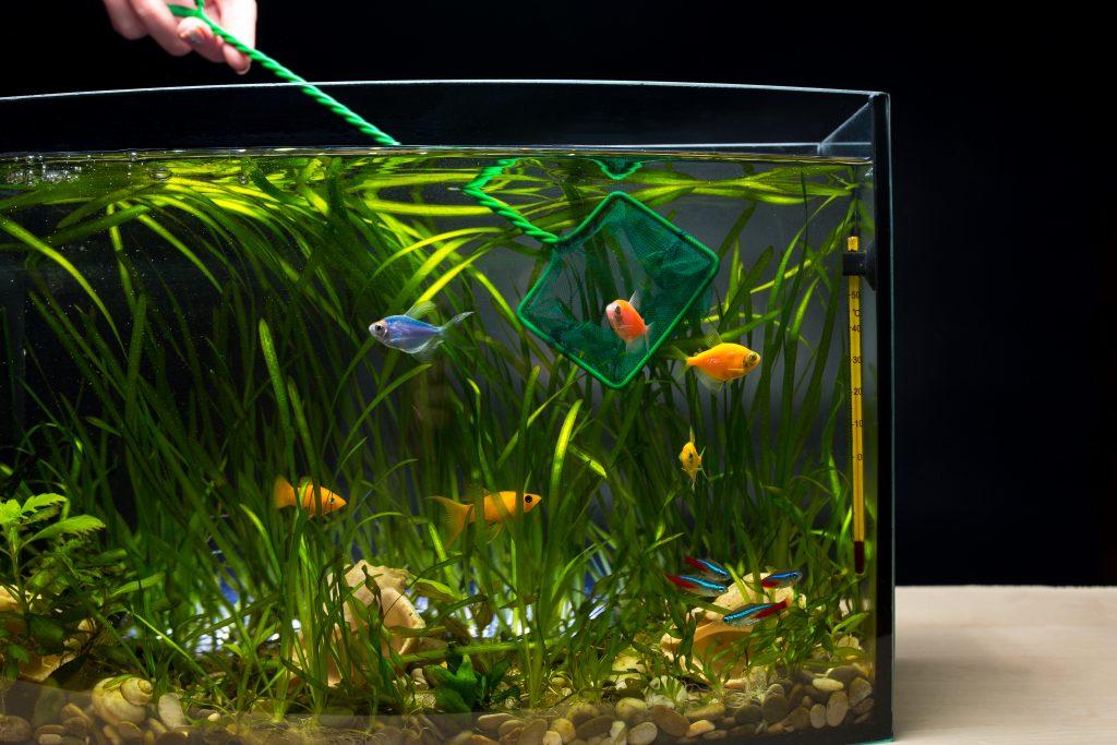 Moving-An-Aquarium-Highland-Moving-and-Storage